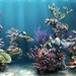 Proteção de Tela: Marine Aquarium