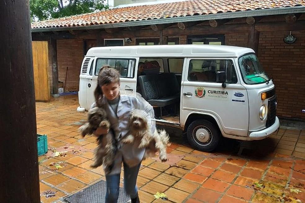 Os animais após receberem avaliação e microchip de identificação, vão ficar sob a guarda da ONG Somos Amigos dos Animais — Foto: Divulgação/Prefeitura de Curitiba