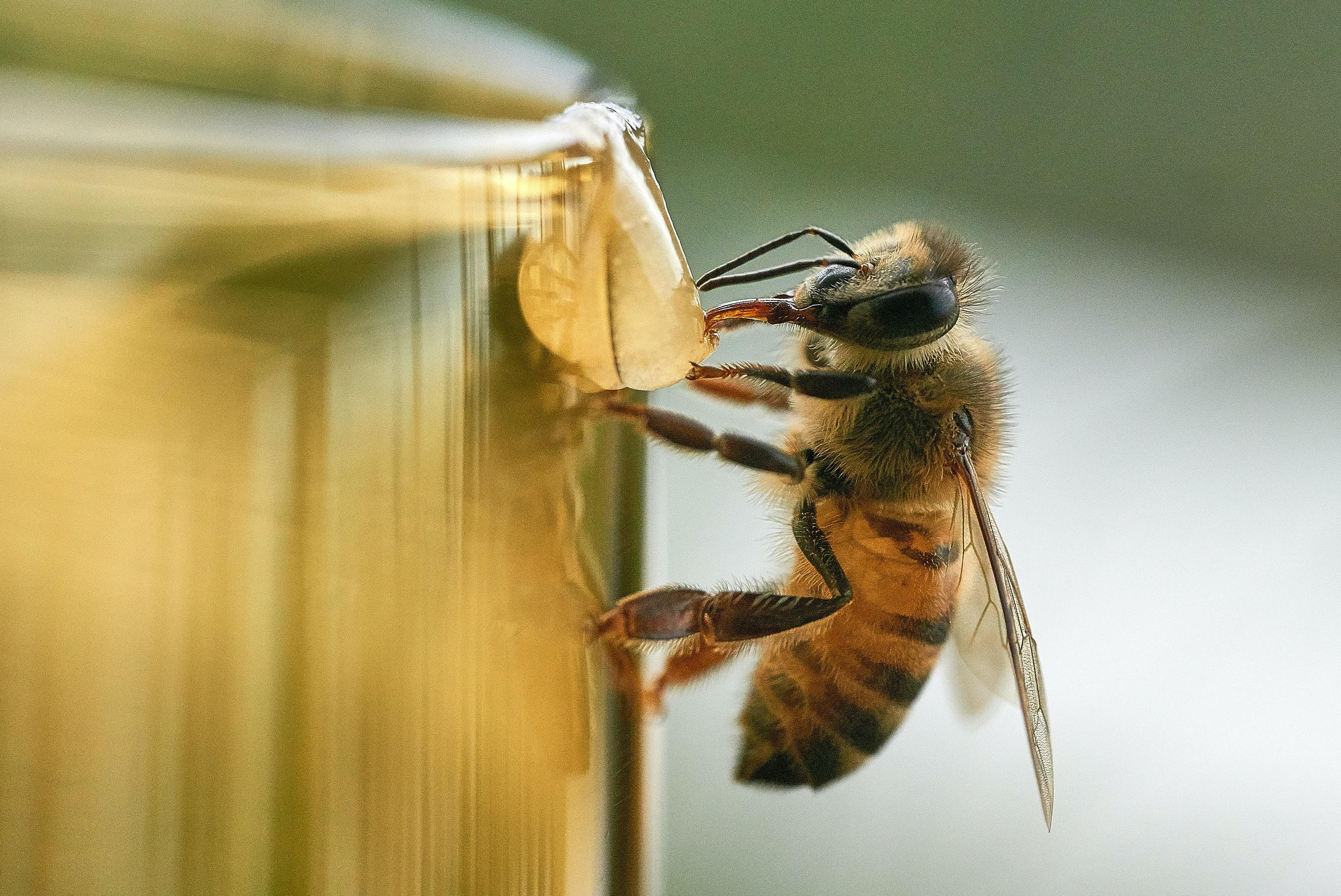 Por seu protagonismo na agroindústria, abelhas têm um papel fundamental na economia do planeta. (Foto: Leandro Fregoni/Unsplash)