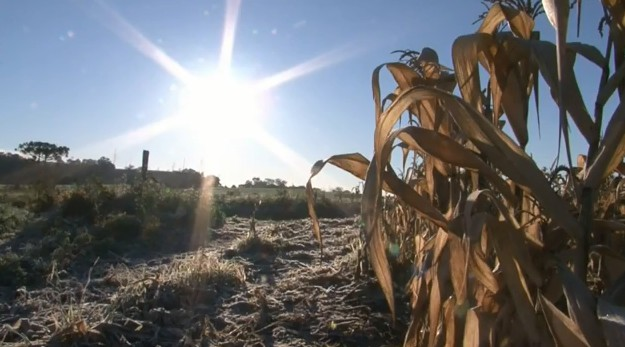 Expectativa de colheita de grãos tem mais uma queda por problemas no clima, diz Conab