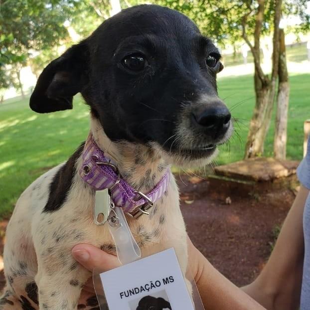 Cachorrinha resgatada no MS (Foto: Fundação MS/Divulgação)
