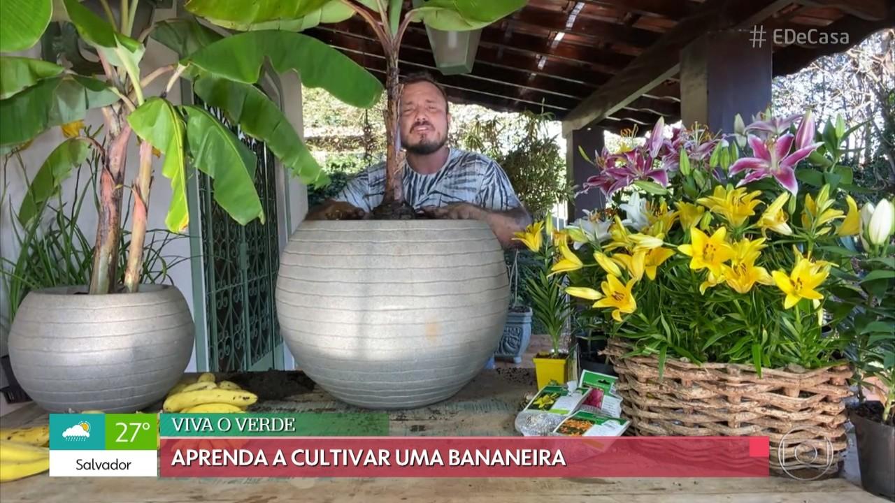 'Viva o Verde': aprenda a cultivar bananeiras