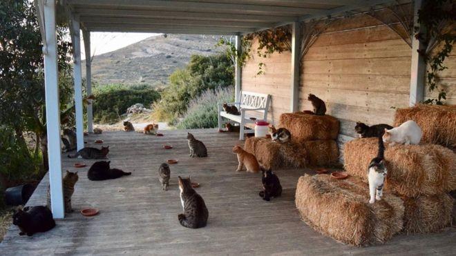 O santuário de gatos tem atualmente 55 animais (Foto: Divulgação/BBC)