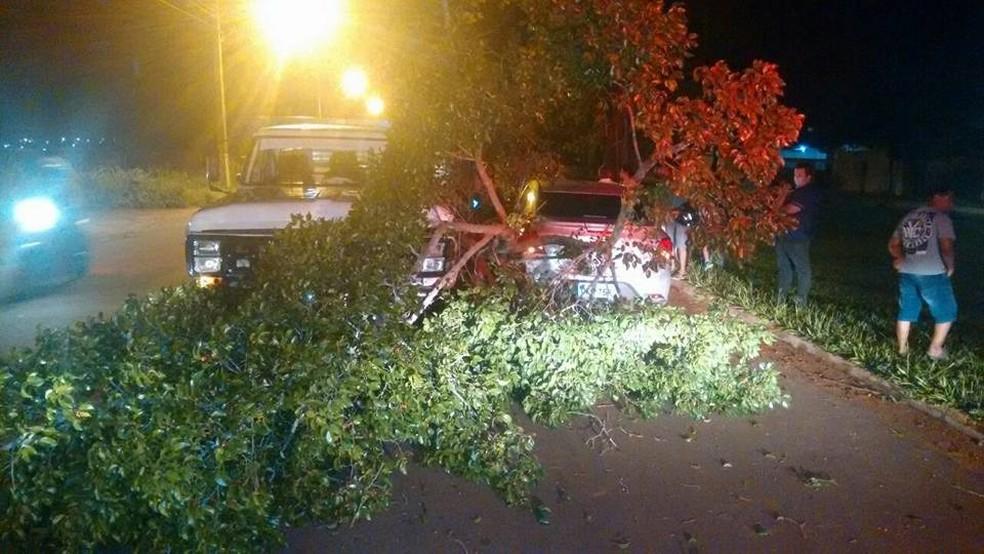 Galhadas tomaram rua e provocou acidente de trânsito (Foto: Diulgação)