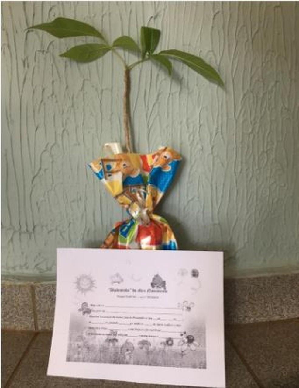 """Médico presenteia as mães da maternidade com diploma de """"mamãe"""" e uma muda que ela será responsável pelo plantio e crescimento — Foto: Arquivo Pessoal"""