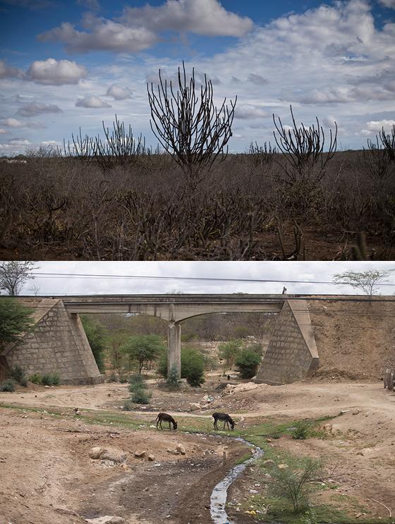 A Caatinga que resta dá a ilusão de que o milagre das chuvas fará tudo rebrotar. Mas o solo morto não carrega esperança de recuperação (Foto: MÁRCIA FOLLETO/AGÊNCIA O GLOBO)
