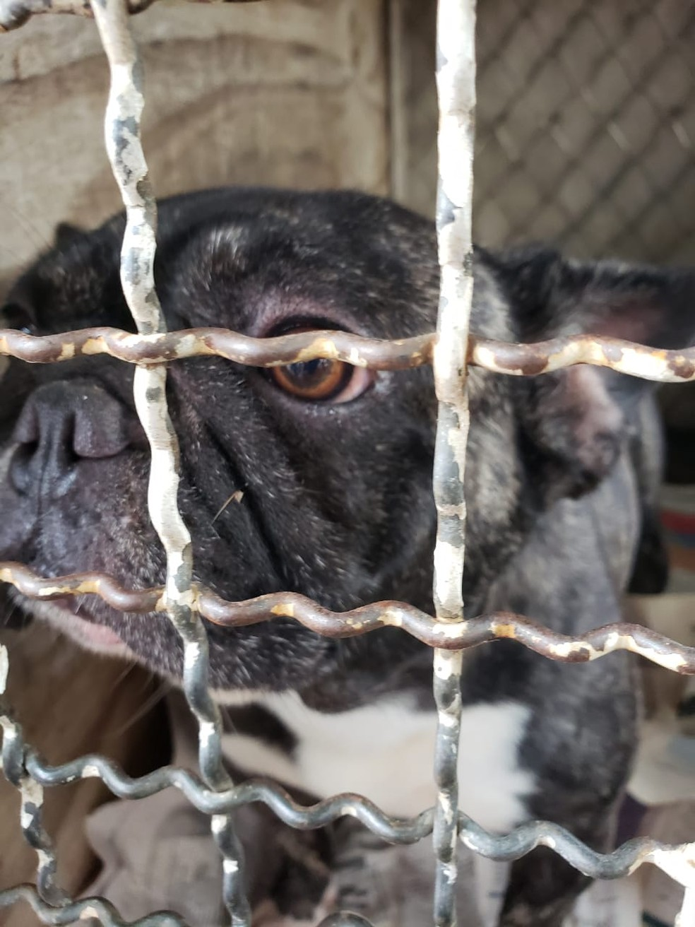 Cães eram agredidos a vassouradas — Foto: ONG/Divulgação