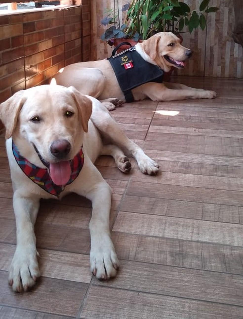 Os cães, Hórus e Zafira já foram usados para localizar dois desaparecimentos que aconteceram no estado — Foto: Corpo de Bombeiros