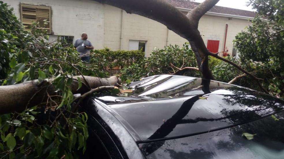 Carro ficou danificado após árvore cair sobre ele em Penápolis (SP) — Foto: Arquivo Pessoal