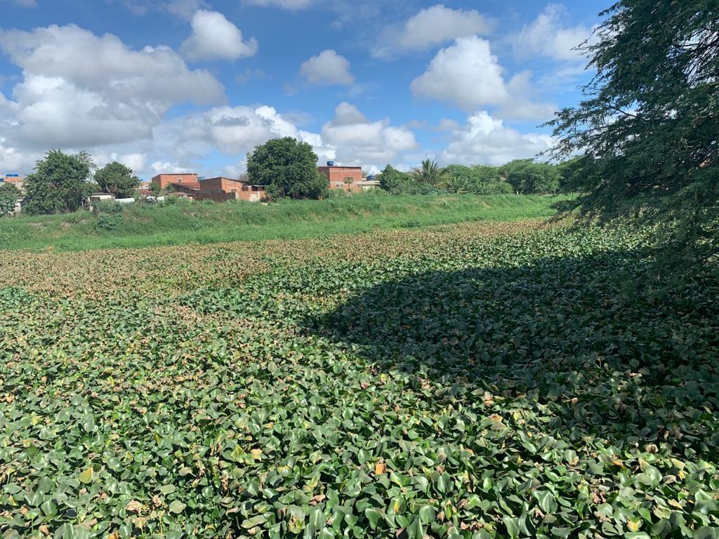 Biólogo explica relação entre a grande proliferação de muriçocas e as baronesas no Rio Ipojuca, em Caruaru: 'Ambiente favorável'