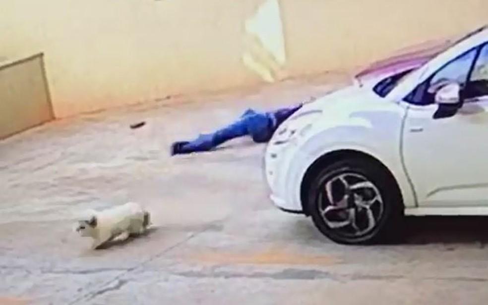 Cadela sai correndo, enquanto João Augusto fica no chão após salvá-la em Ribeirão Preto, SP (Foto: Reprodução/Câmeras de segurança)