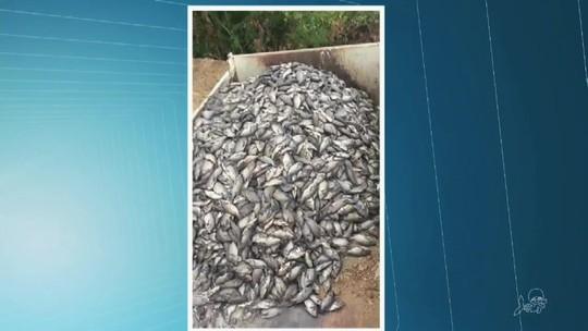 Cerca de 50 toneladas de peixes mortos são retiradas de açude no sul do Ceará