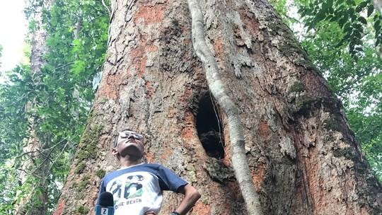 #Zapp deste sábado (28) aborda paraísos da Amazônia