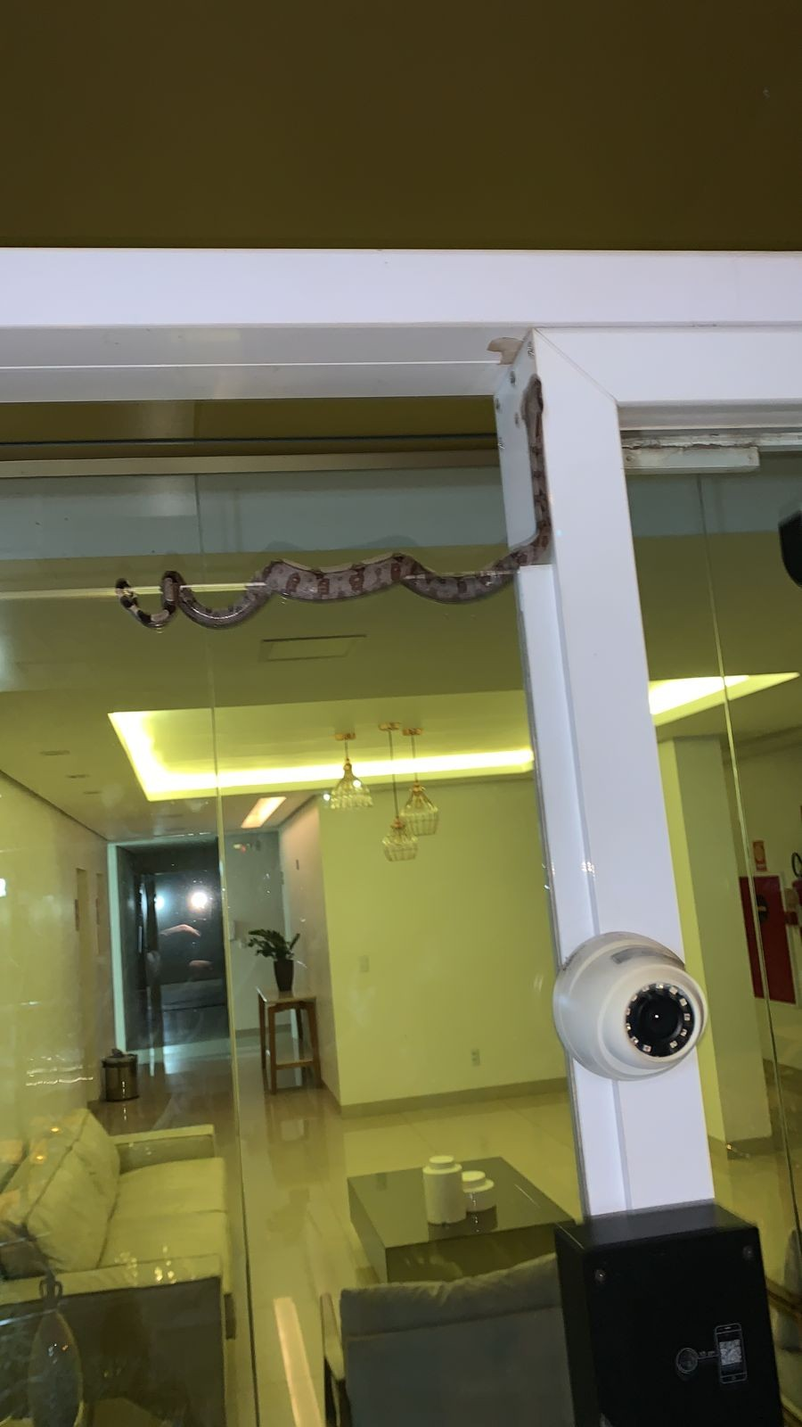 Cobra assusta moradores ao aparecer na entrada de condomínio no centro de Palmas; Vídeo