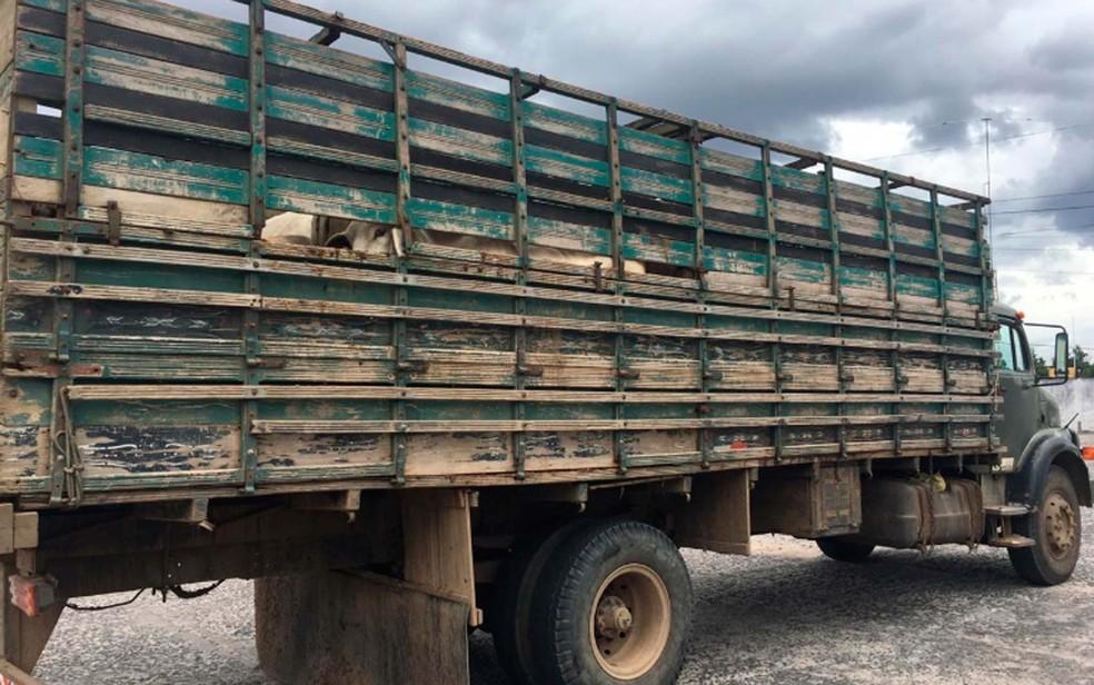 Três foram presos e 59 cabeças de gados foram recuperadas na Bahia — Foto: Divulgação/SSP-BA