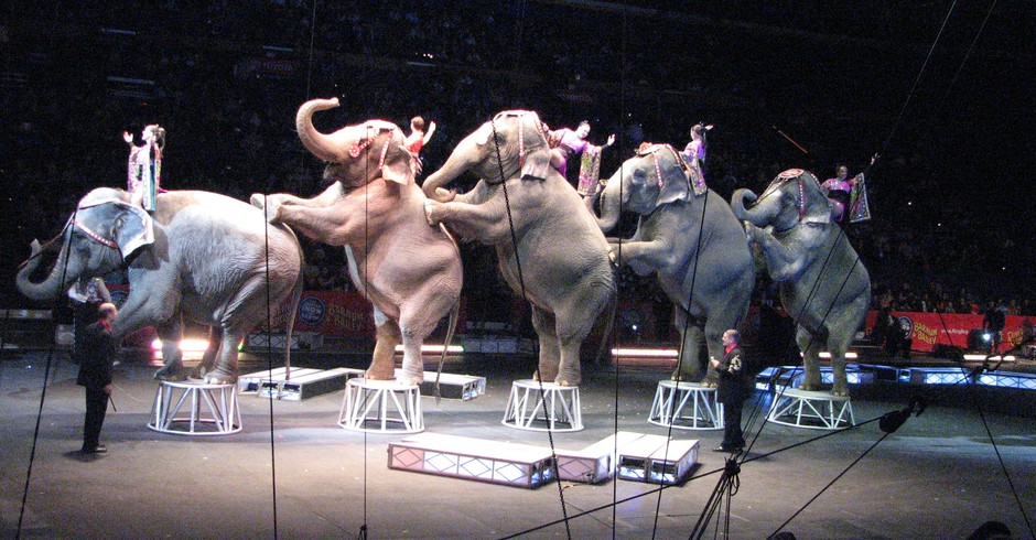 Elefantes durante apresentação do circo Ringling Bros. and Barnum & Bailey, dos EUA (Foto: Wikicommus)