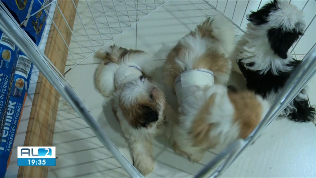 Encontrados cães que foram roubados de pet shop em Maceió