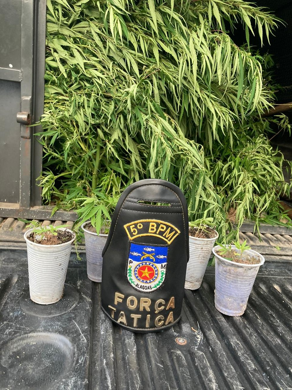 Polícia apreende 12 plantas e 20 mudas de maconha em 'Igreja dos Humildes' — Foto: 5º BPM