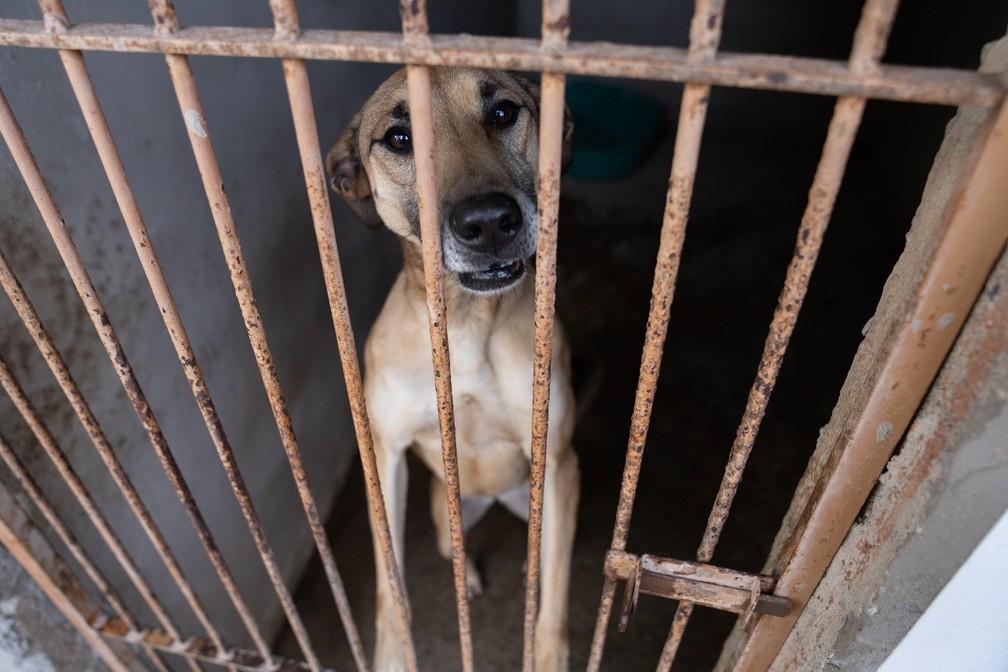 Instituto Pet Brasil estima que há mais de 170 mil cães e gatos abandonados sob tutela de ONGs e protetores em todo o país — Foto: Marcelo Brandt/G1