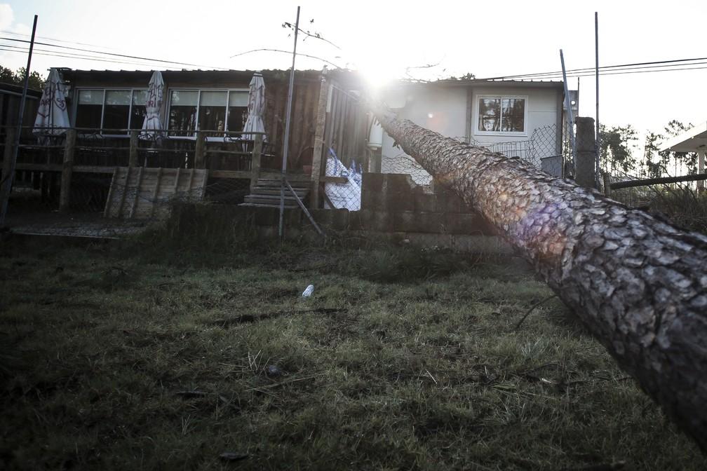 Árvore caída sobre casa neste domingo (14), em Figueira da Foz, em Portugal — Foto: AFP/Carlos Costa