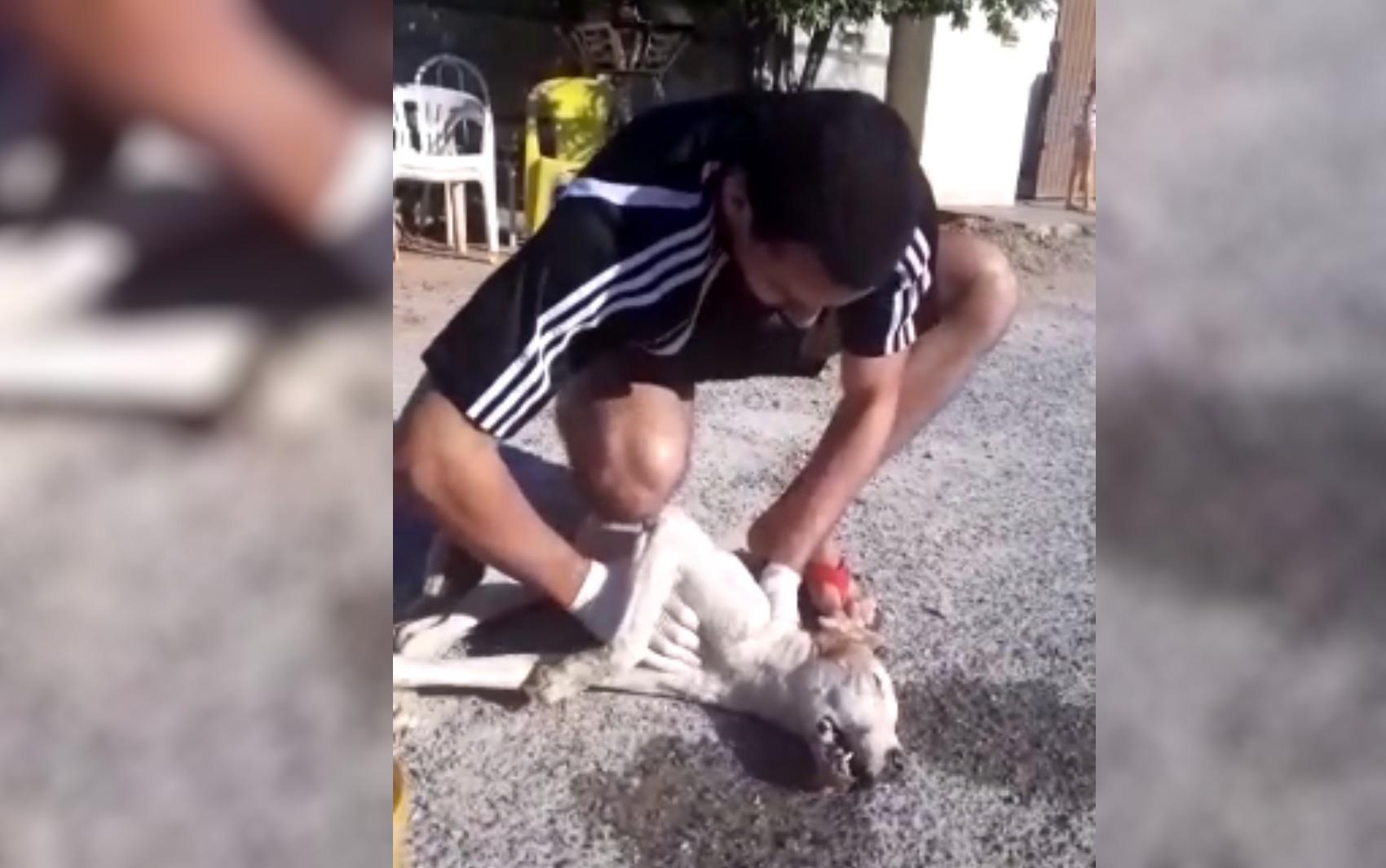 Aluno de veterinária salva cão que teve parada cardiorrespiratória em rua de Piranhas; vídeo
