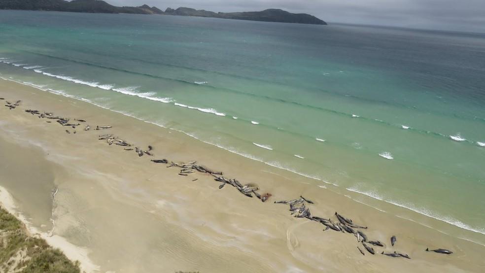 Não está claro o que levou os animais a ficarem presos na areia — Foto: Departamento de Conservação da Nova Zelândia/BBC