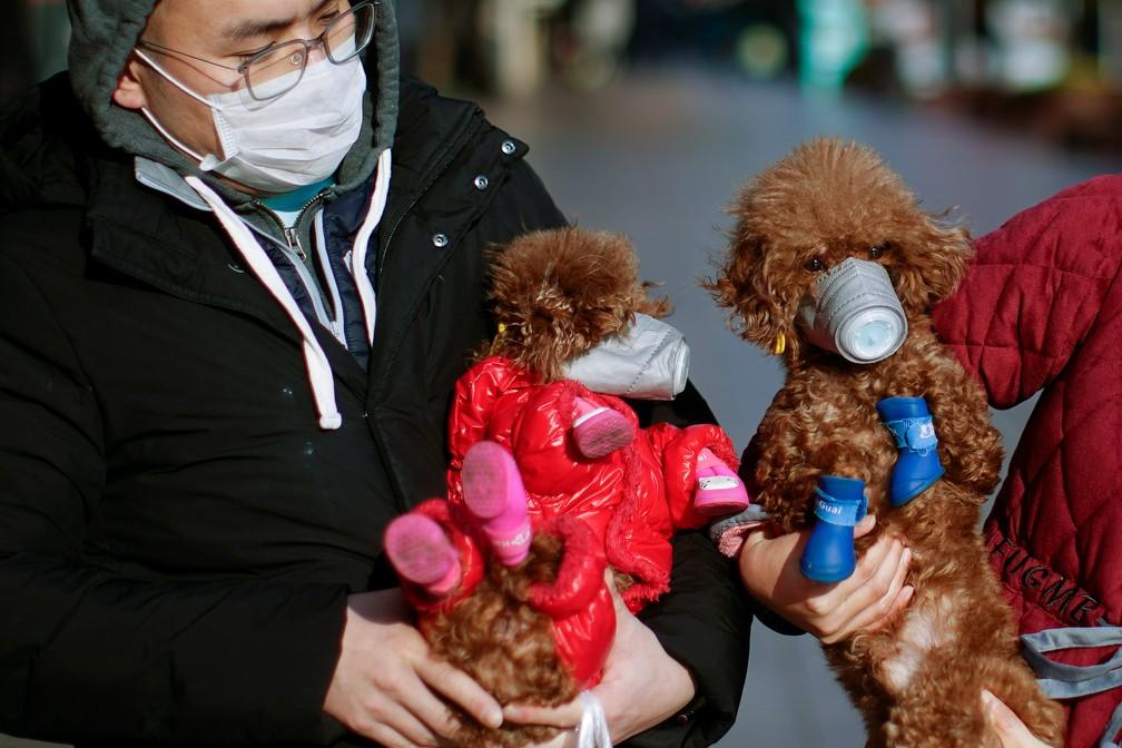 Cães com máscaras em área comercial de Shanghai — Foto: Aly Song/Reuters