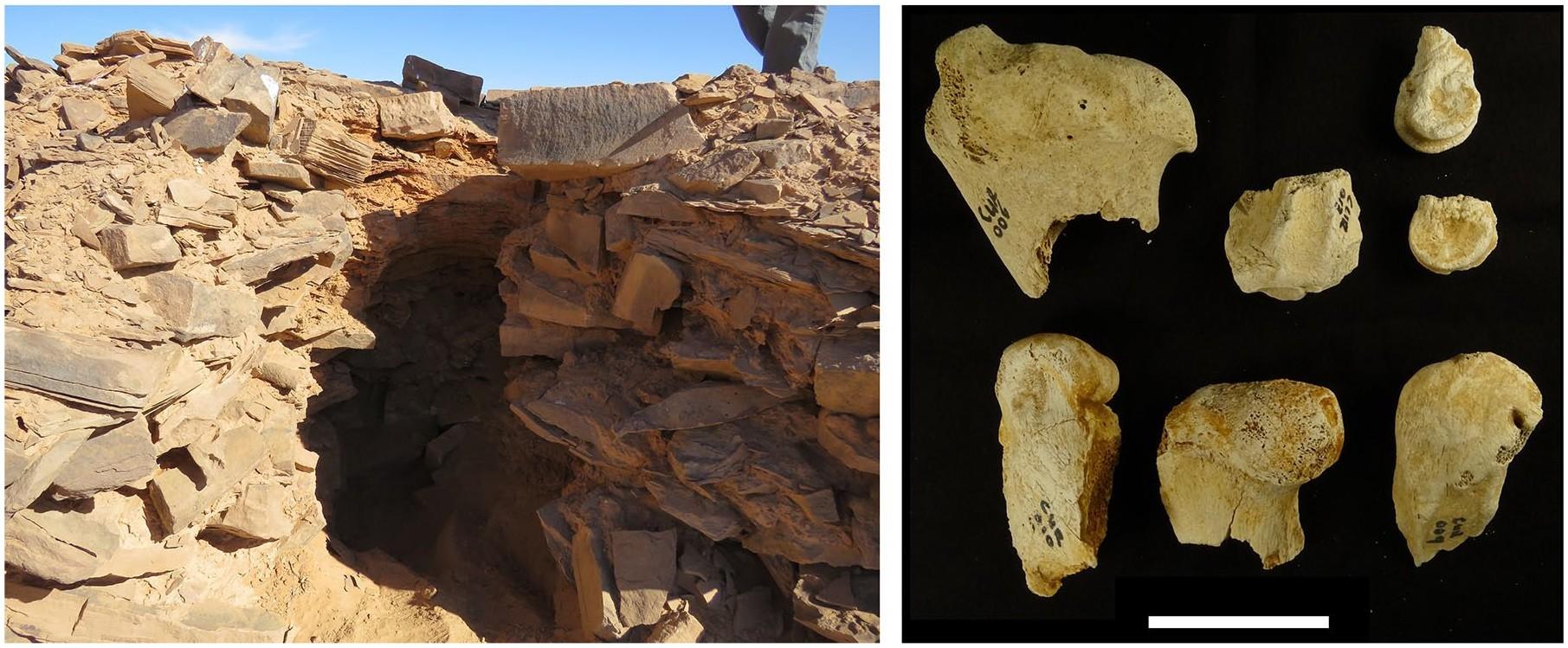Buraco cavado na plataforma de mustatíl e ossos encontrados em um dos monumentos (Foto: The Holocene)