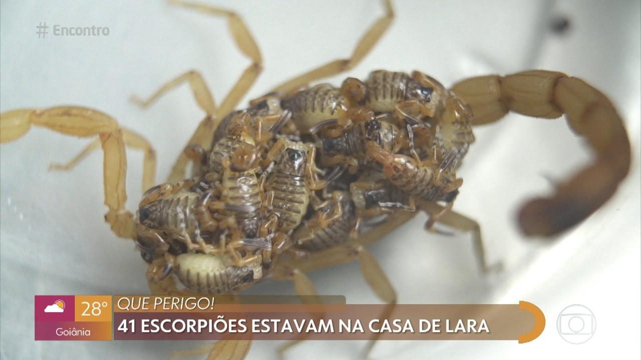 Família encontra mais de 40 escorpiões em casa em Brasília