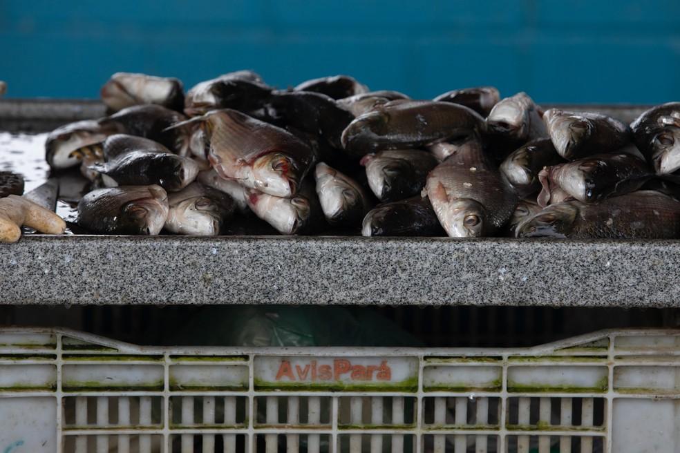 Em breve, os compradores poderão aprender a 'história' dos peixes que vão comer — Foto: Marcelo Brandt/G1