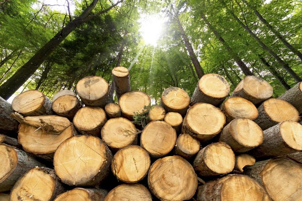 Desmatamento em MT — Foto: Divulgação