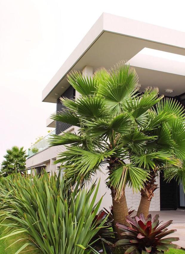 As plantas seguem pelo corredor lateral da casa, oferecendo privacidade e conectando a fachada aos fundos (Foto: Luiz Cardoso/ Divulgação)