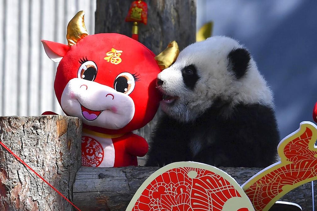 Um urso panda perto da decoração de Ano Novo Chinês em um centro de conservação em Sichuan, em 3 de fevereiro de 2021 — Foto: Chinatopix via AP