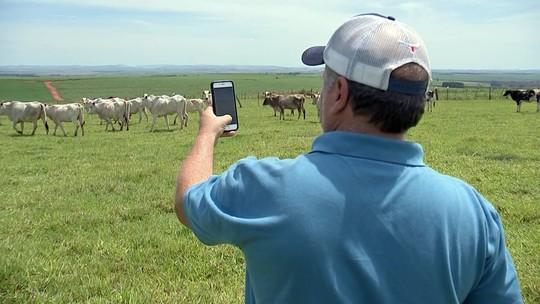 Aplicativos facilitam a vida dos criadores de gado