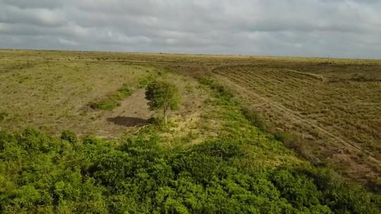 Noruega suspende repasse de R$ 133 milhões para a preservação da Floresta Amazônica