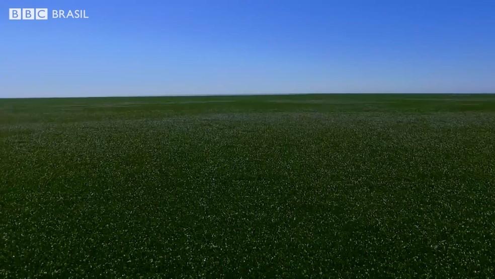 Imensidão verde cobre boa parte da superfícia do lago (Foto: BBC)