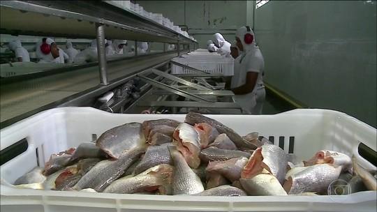 Ministério da Agricultura suspende exportação de pescado para UE