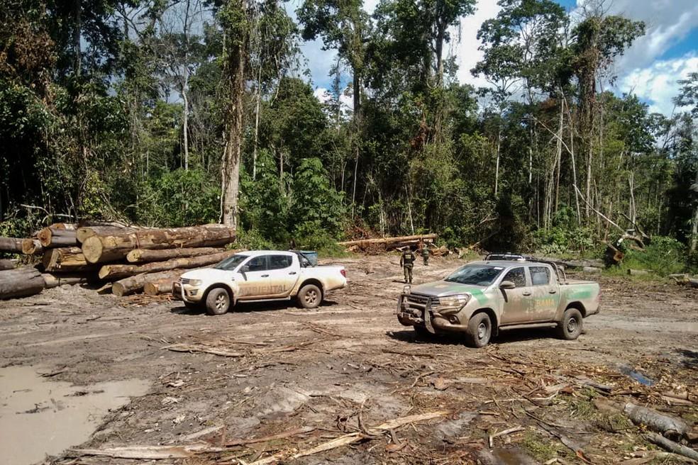 Madeira foi extraída da Terra Indígena (TI) Tembé no Pará e o volume apreendido é equivalente a 150 caminhões carregados. (Foto: Reprodução / Ibama)