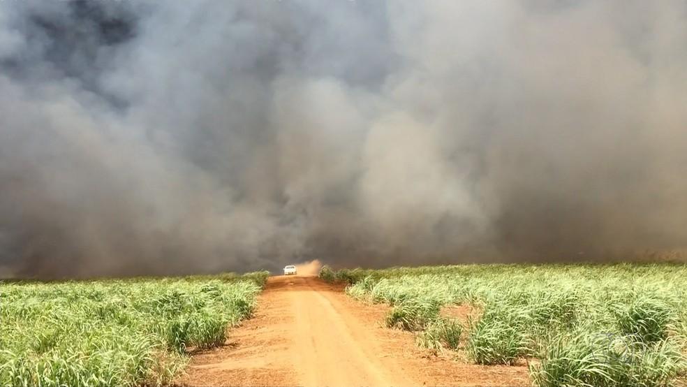 Plantações inteiras foram destruídas pelo fogo em Pedro Afonso (Foto: Reprodução/TV Anhanguera)