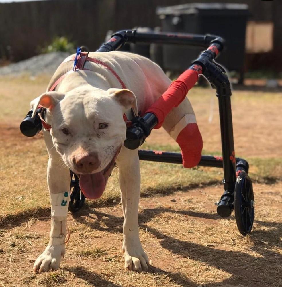 Sansão recebeu a cadeira de rodas na tarde desta quinta-feira (9). — Foto: Ticiana Lima Dornas.