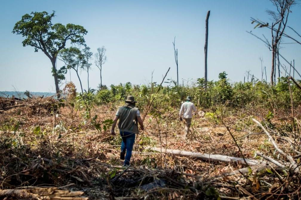 A operação ocorreu entre os dias 13 e 17 de agosto e foi divulgada nesta quarta-feira (28) em Marcelândia — Foto: Christiano Antonucci/ Secom-MT