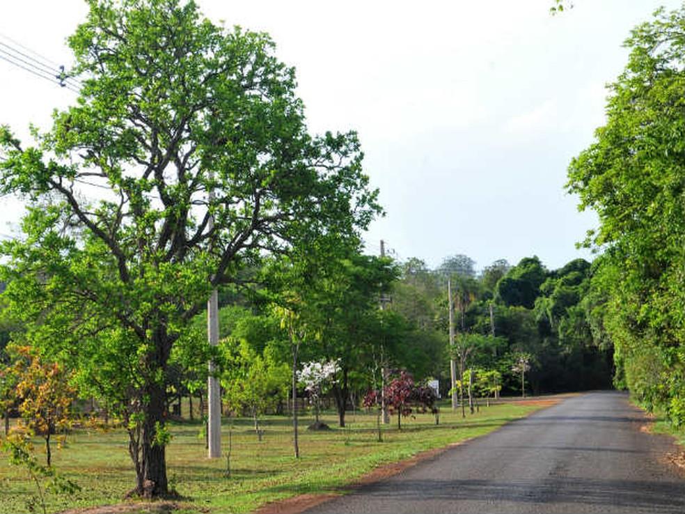 Cagaiteira, espécie frutífera que ocorre no Cerrado, no Parque Nacional de Brasília — Foto: Tony Winston/Agência Brasília