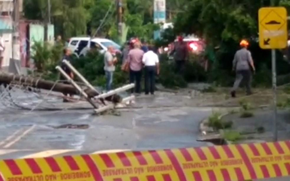 Árvore caiu sobre o carro e matou o motorista em Guarulhos â?? Foto: Giulia Amaral/VC no SP