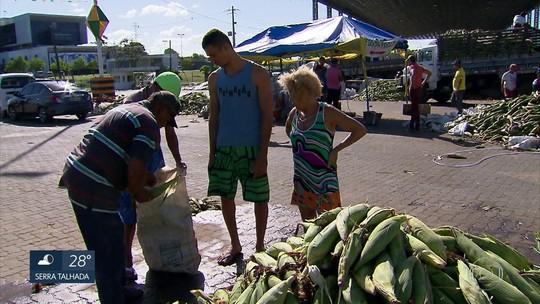 Comerciantes baixam preço do milho no Ceasa e comemoram vendas para o São João