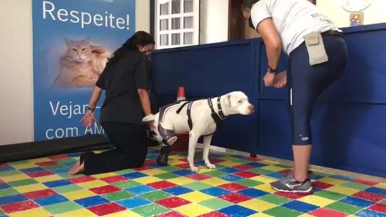 Sansão faz fisioterapia em Belo Horizonte