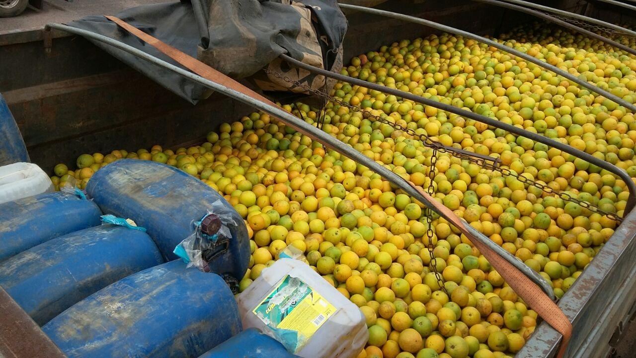 Motorista de caminhão é detido em MS por levar combustível junto com 15 t de laranja: 'para economizar'