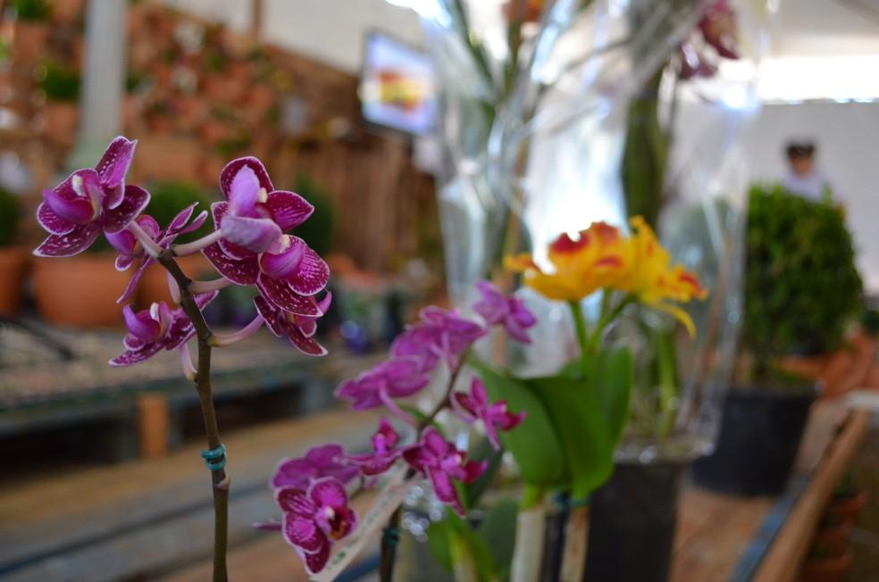 Sorteio de uma orquídea faz parte da Feira de Holambra em Juiz de Fora (Foto: Christian Wentz/G1)