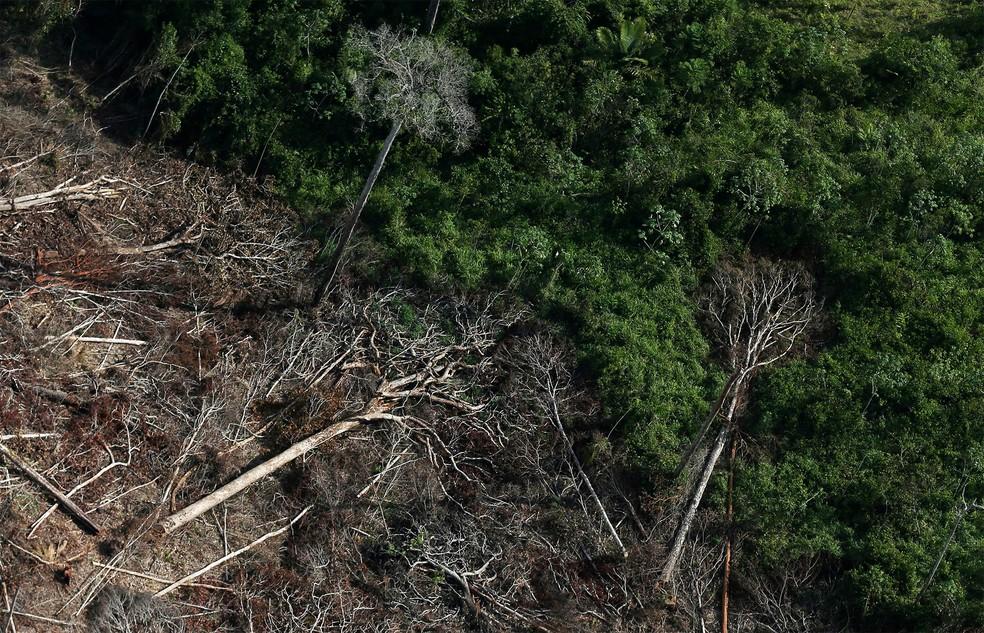 Árvores caídas em área desmatada da Amazônia em Itaituba, no Pará — Foto: Ricardo Moraes/Reuters/Arquivo