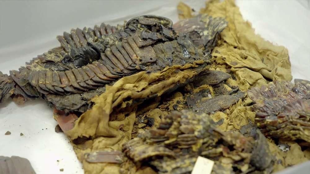 Fragmento de armadura que seria de Tutancâmon (Foto: Divulgação)