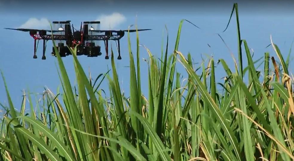 Drones são usados para espalhar as cápsulas pela plantação (Foto: TV TEM / Reprodução )